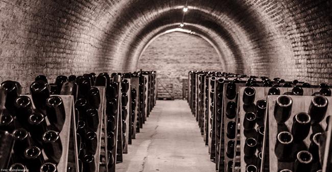 Kellergang mit Rüttelpulten bei Champagne Gosset