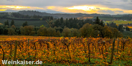 Willamette Vineyards