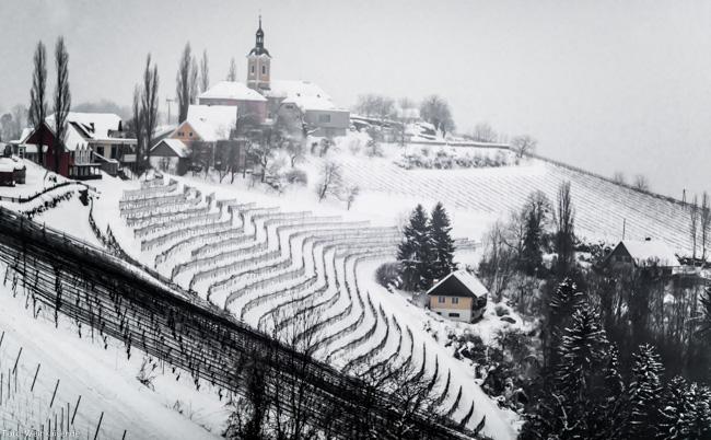 Winterliche Weinberge in Kitzeck im Sausal (Steiermark).